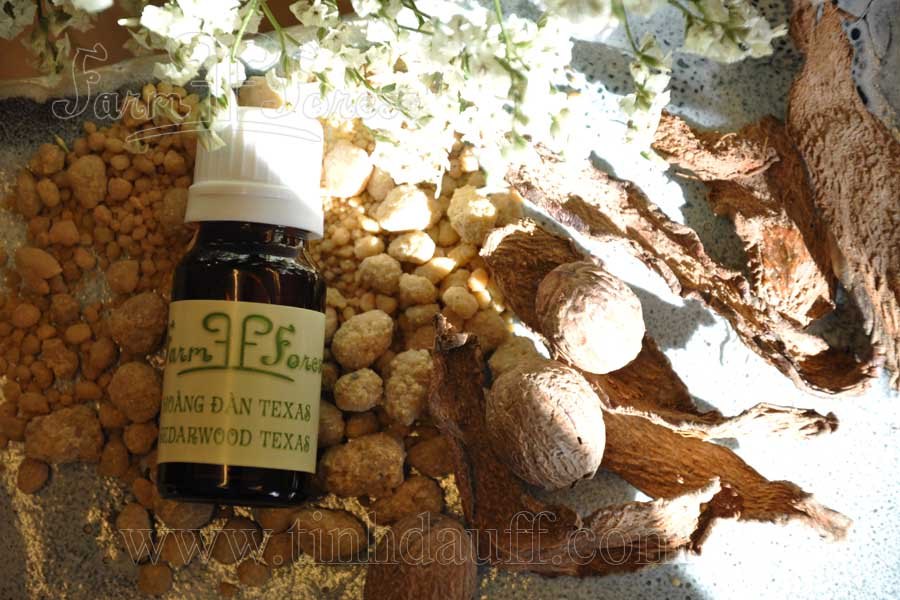 tinh dau hoang dan cedar wood pure essential oil